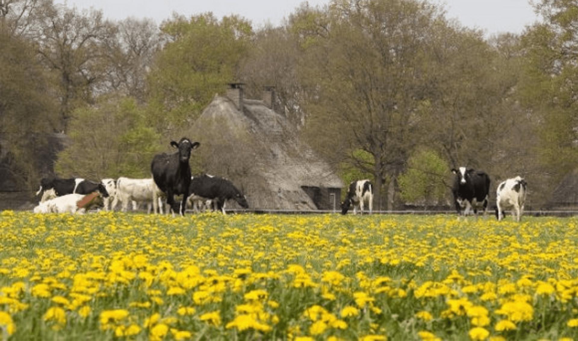 Fietsrondreisvakantie door Drenthe