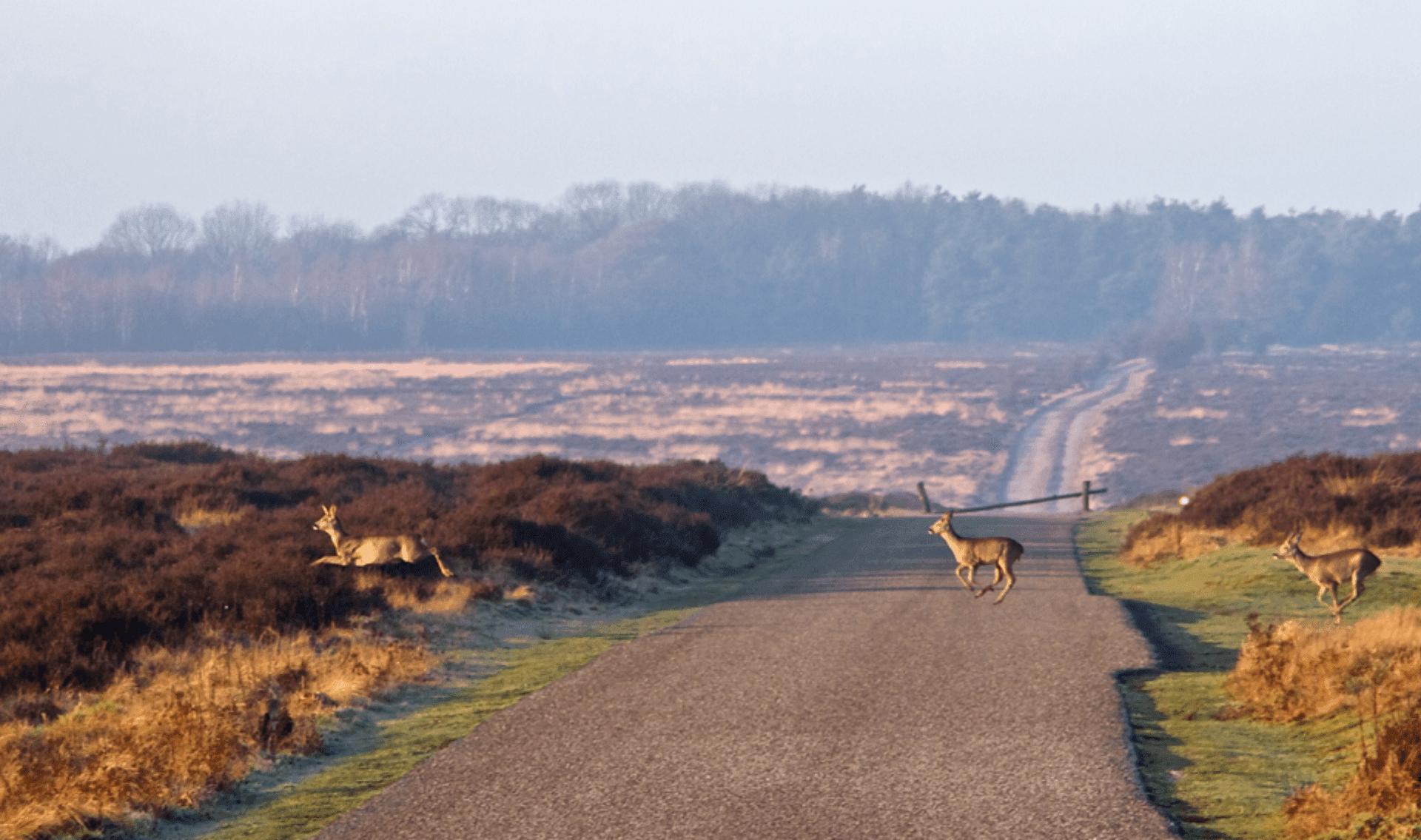 Fietsvakantie Veluwe en IJssel