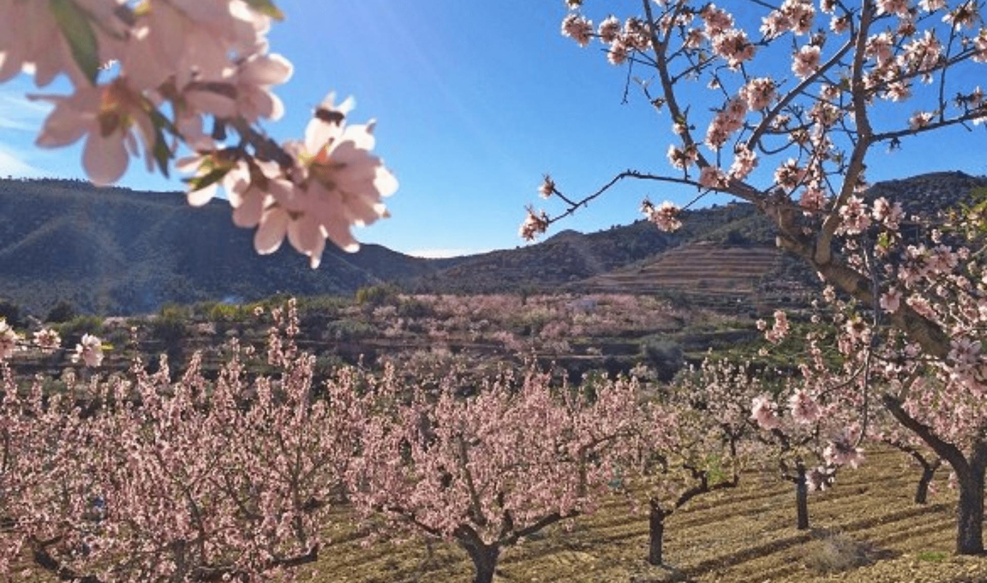 Wandelvakantie Rondom Valencia Olijven en Sinaasappels