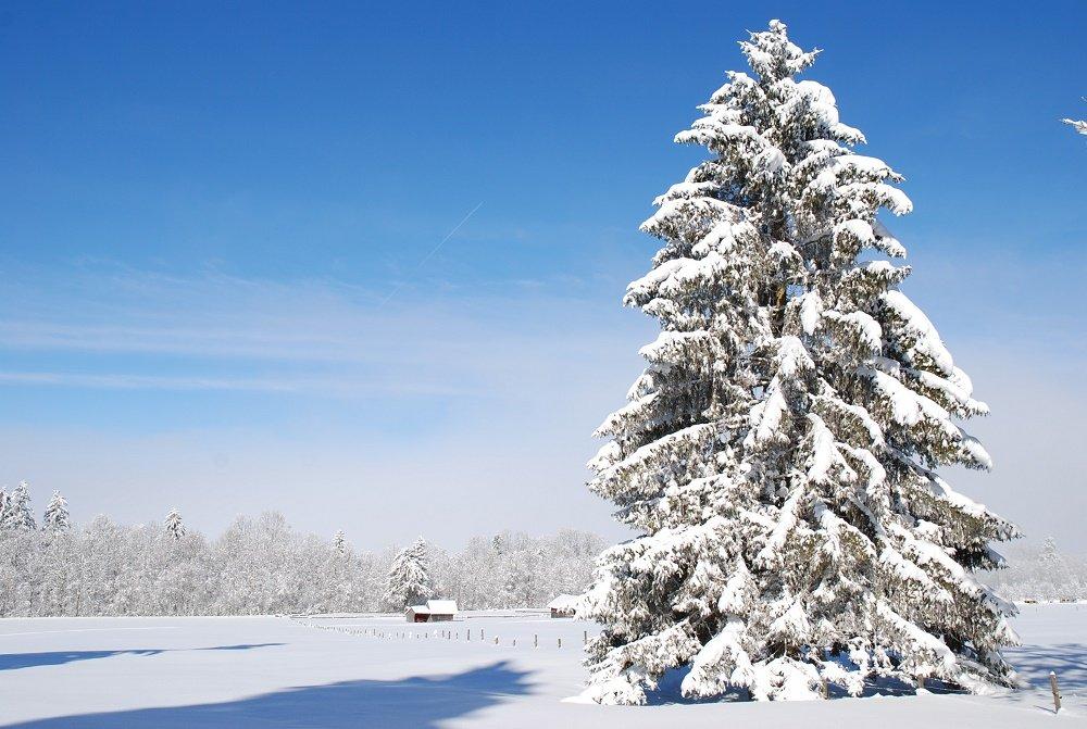 winter boom in sneeuw