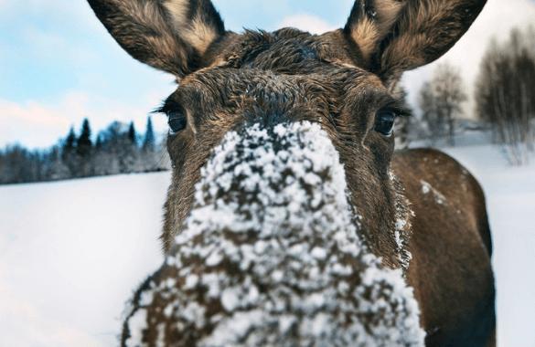 Winterspecial Zweden | Fitál Vakanties