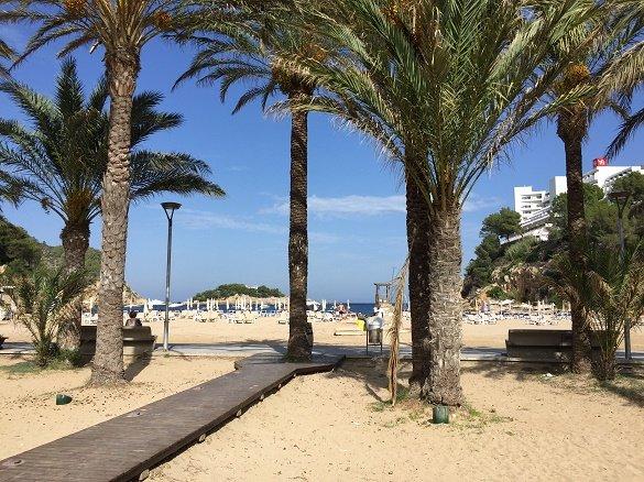 strand met palmbomen Ibiza