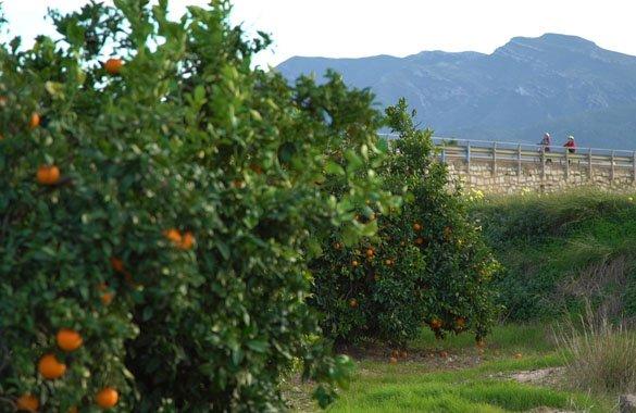 sinaasappels en brug