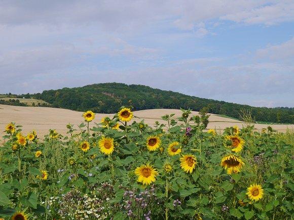 Thuringen in de omgeving van Jena