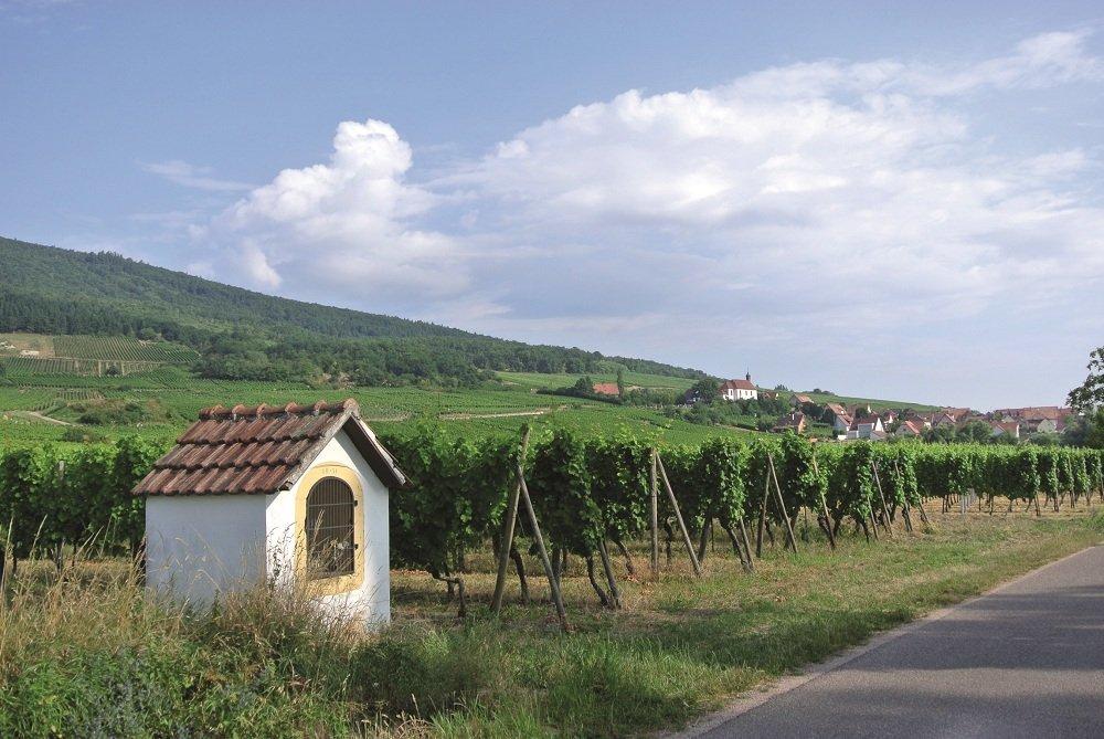 Fietspad met wijnranken er naast op de achtergrond hotel Les Verger