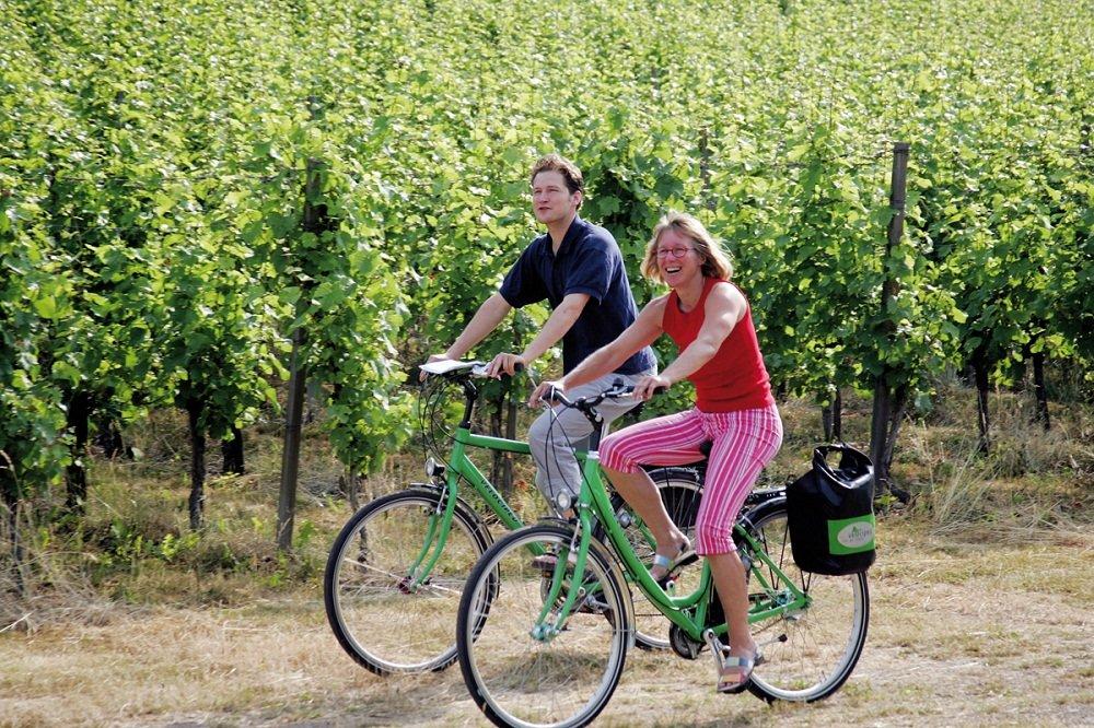 2 fietsers  wijnvelden