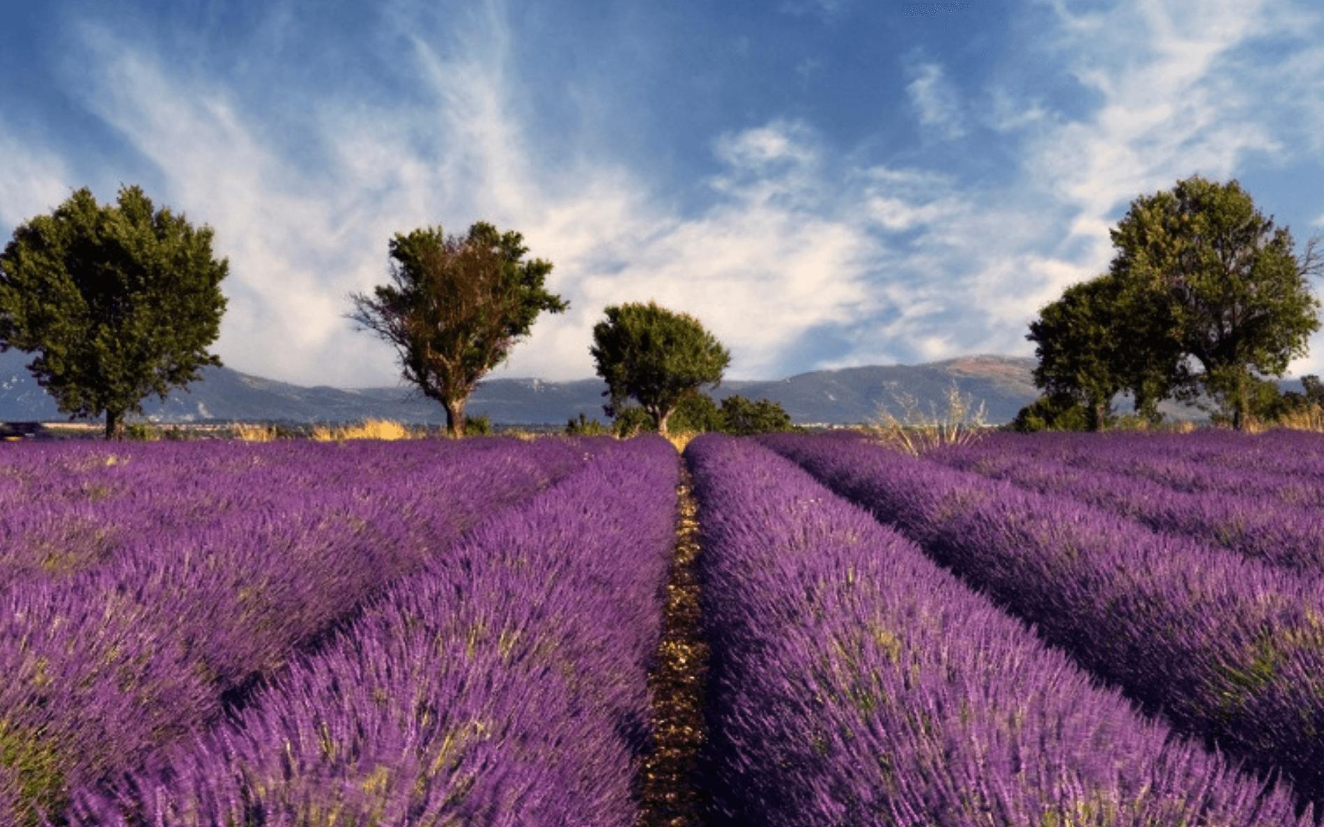 Fietsvakantie met verblijf op campings in de Provence - Frankrijk