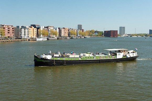 Feniks in Nederland