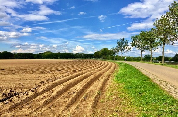aspergevelden Noord Limburg