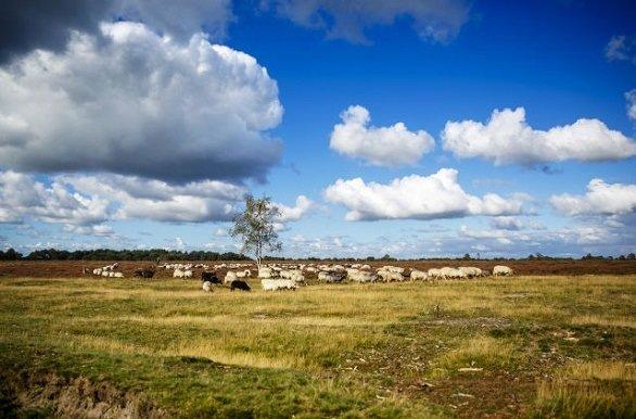 Wandelen en fietsen in Zuidwest Drenthe en Zuidoost Friesland door Nationaal Park Drents-Friese Wold