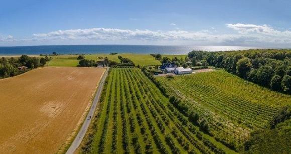 Denemarken Vasterhavegarden wijngaard
