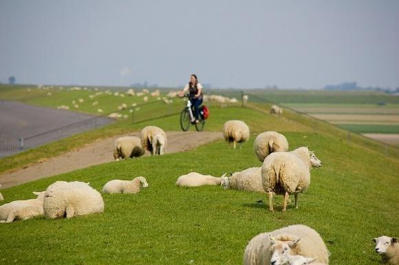 fietser zeedijk